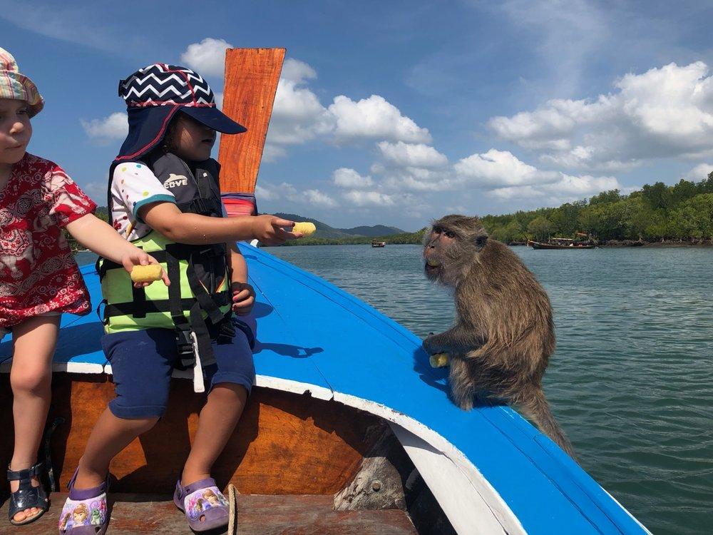 På utflykt i mangroveträsket och mata apor.