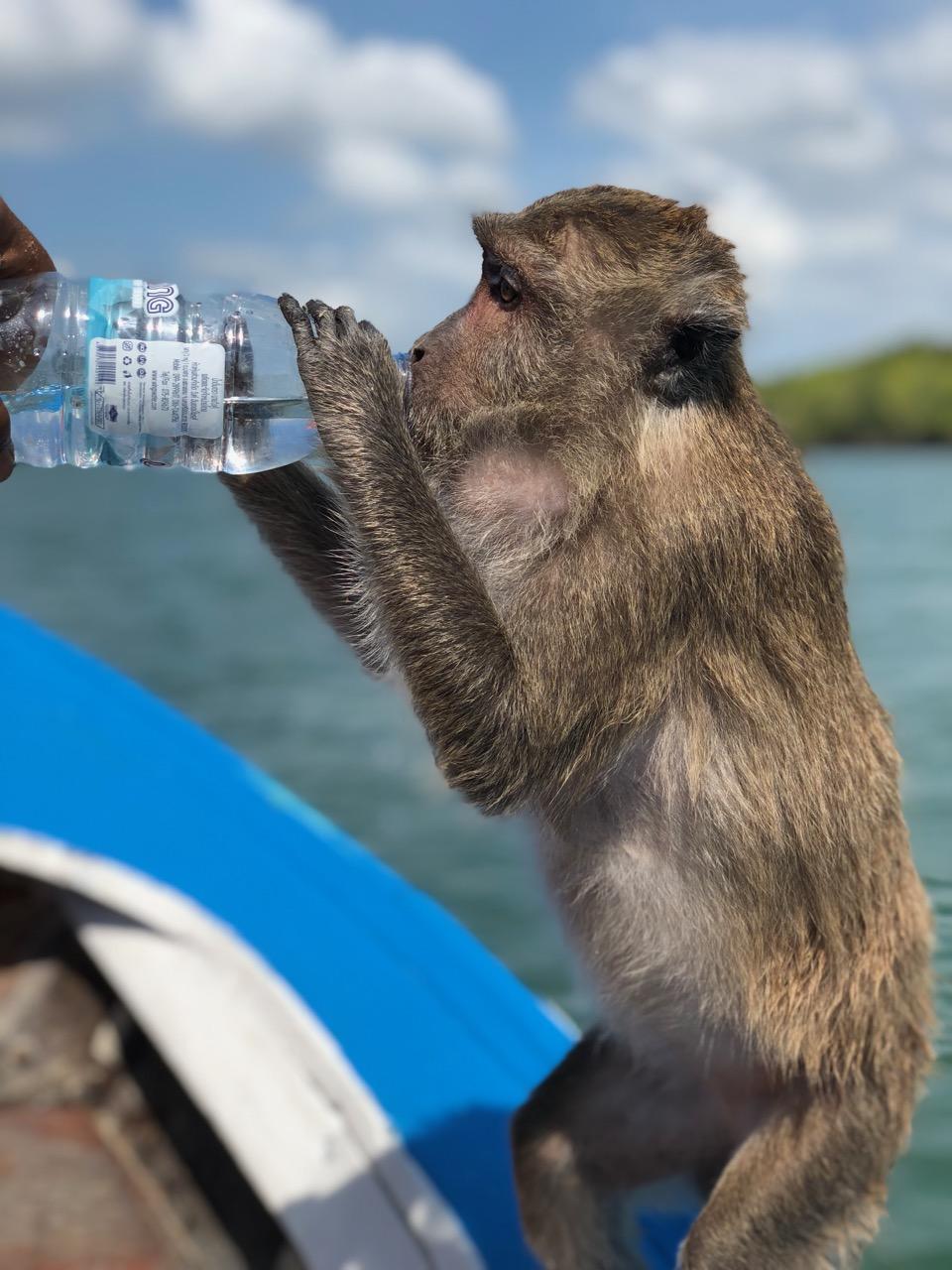 Aporna är onekligen civiliserade…