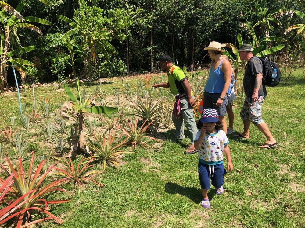 Utflykt med guide till ecofarmen. På bilden ananasplantor. Här fanns peppar, kashew, mango och diverse andra exotiska frukter.