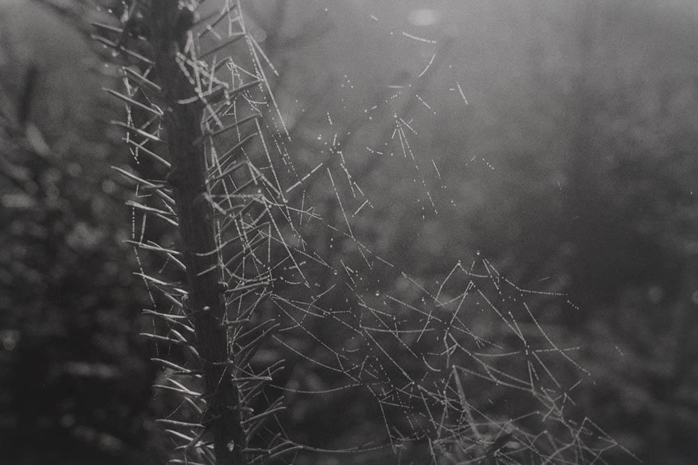 Natur_1.jpg