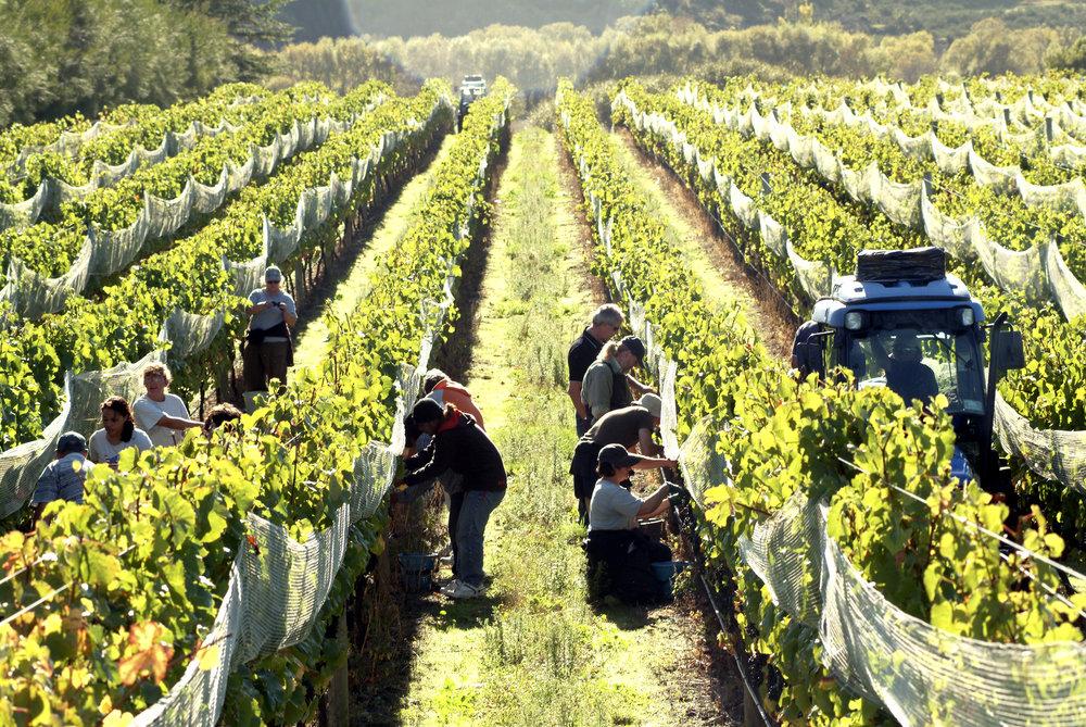 Martinborough Winery and Foodie 4.JPG