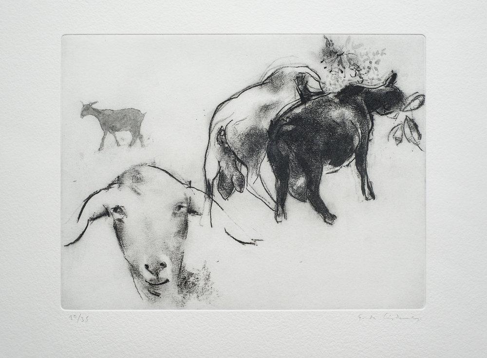 FÉLIX DE CÁRDENASLa cabra es un motivo recurrente del Arte Contemporáneo, de las vanguardias artísticas. Las plantea como símbolos de un paisaje apenas insinuado, ausente como realidad física concreta, presentido y vivido mediante las acciones, inadvertidas, de los animales. -