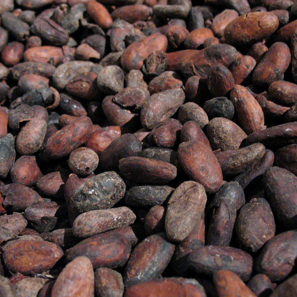 Cocoa<strong>Cocoa is rich in antioxidants and emollients.</strong>