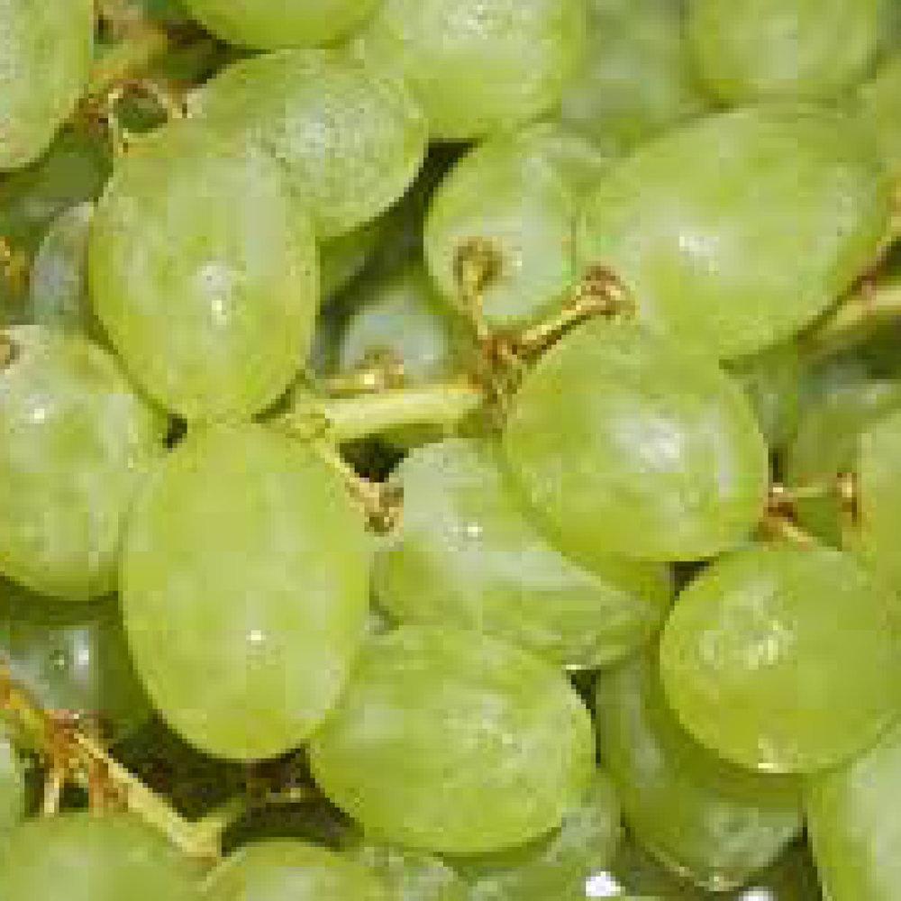 Druivenzaad<strong>Druivenzaad is rijk aan antioxidanten, deze voeden het haar en houden het gezond.</strong>