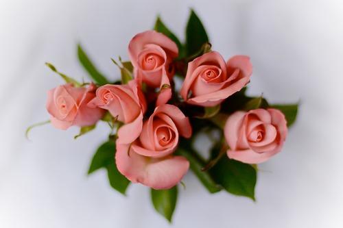 tru-flowers.jpeg