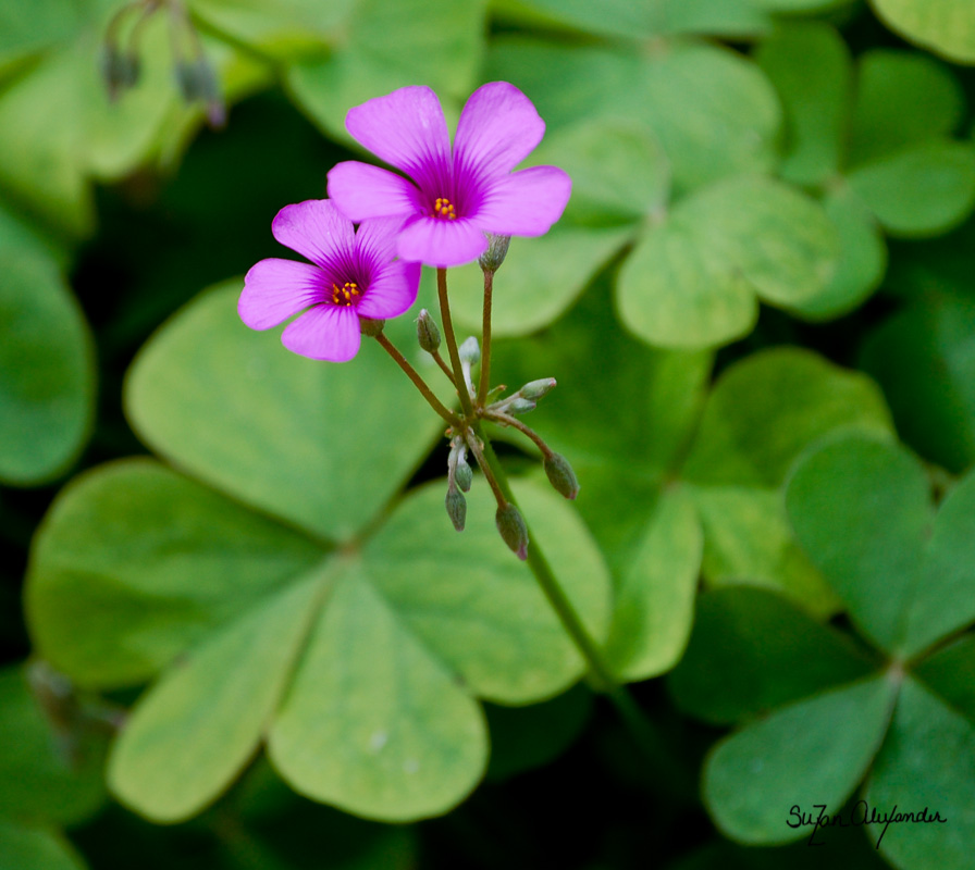 1103_Botanical_305.jpg