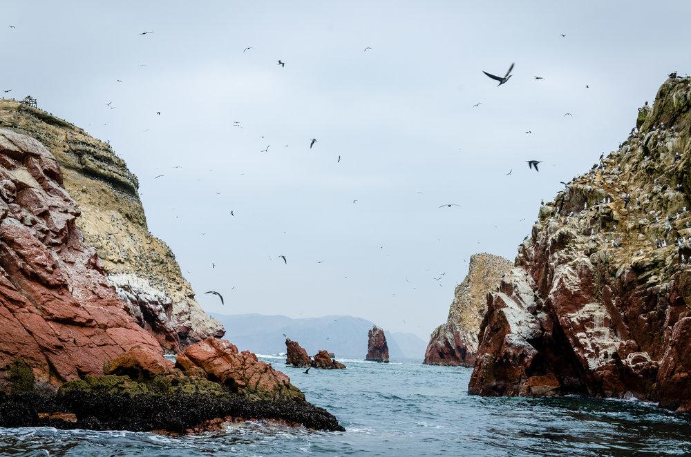Islas Ballestas 2 Digital Photograph © 2015 SuZan Alexander