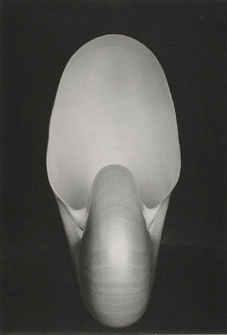 Edward Weston's Photograph of Nautilus