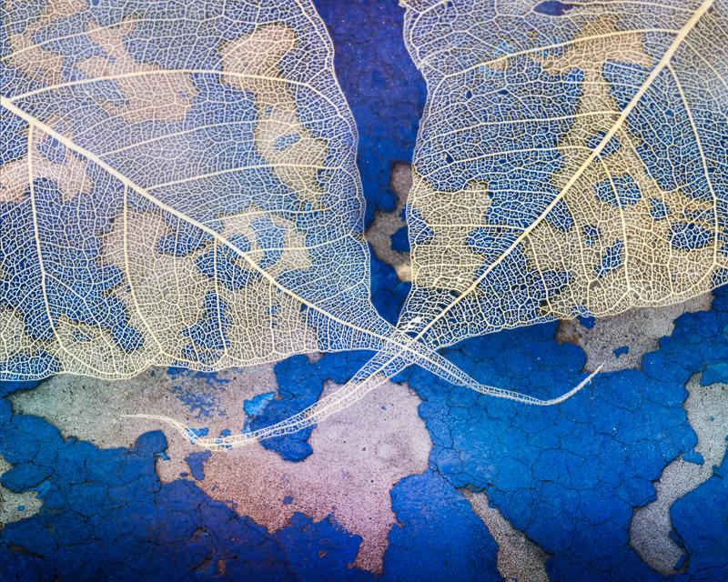 Skeleton Leaves on Blue