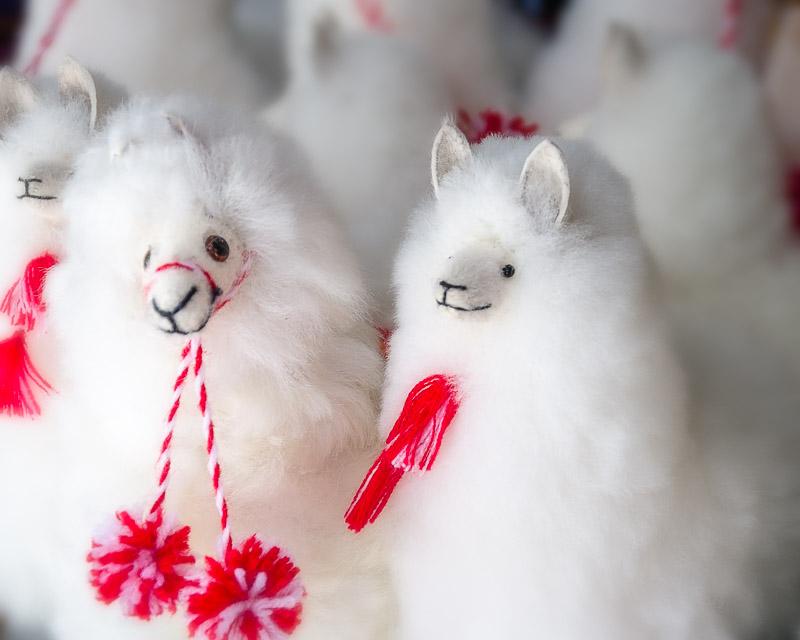 Llamas at the Market - 2 (Peru)