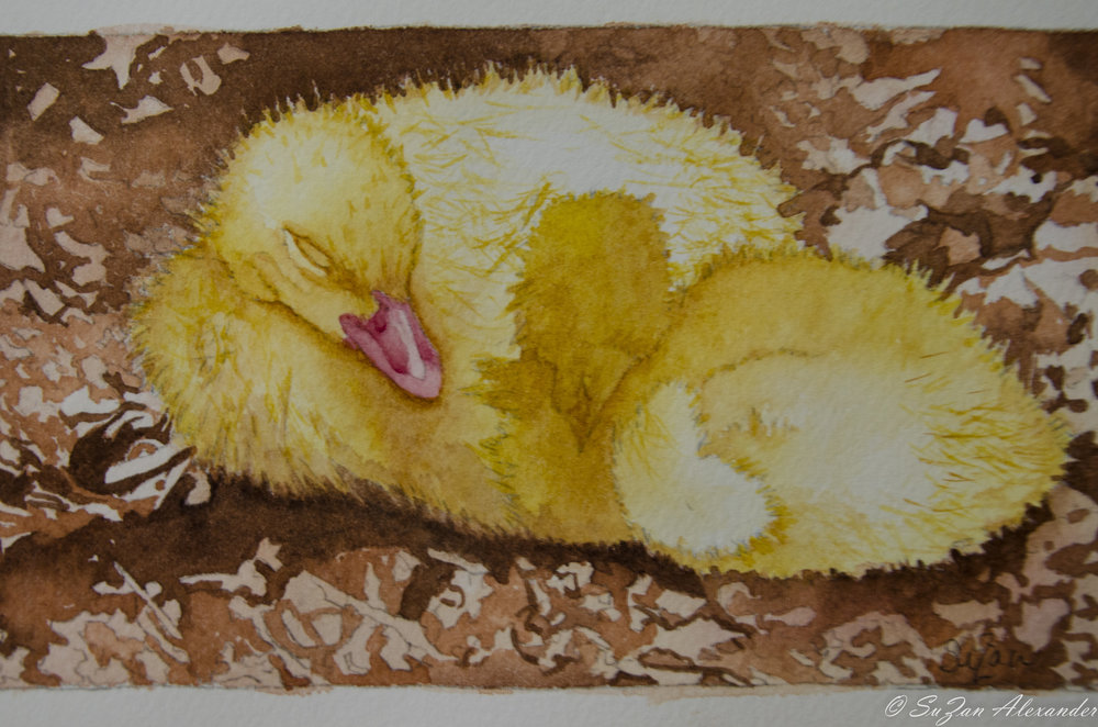 Watercolor Project 5: Snuggling Ducklings