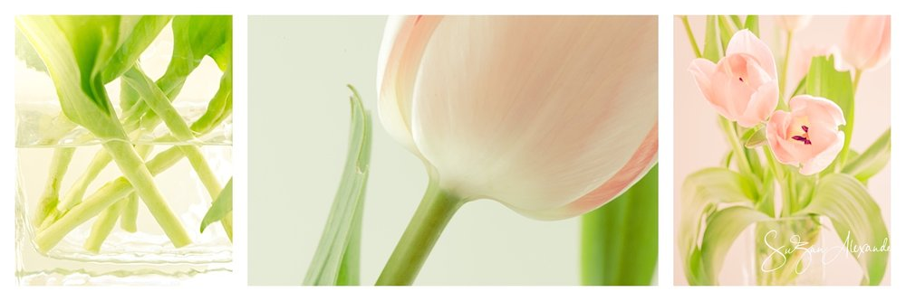 Tulip Photo Collage, Digital Photography, © 2013 SuZan Alexander