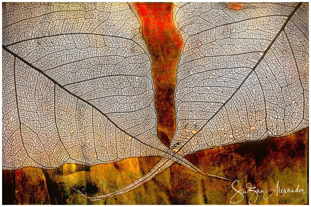 © 2013 SuZan Alexander.   Skeleton Leaves Composite on Warm Colors  . Digital Photography