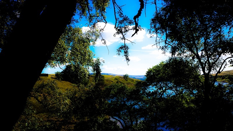 Trees, lakes and hills.jpg