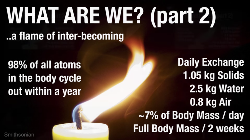 We are the Earth, the Earth is Us. In a day, 7% of your body mass is exchanged with your surroundings. 7% of your body is approximately equal to one arm. Although water and skin exchange more quickly, even 98% of the calcium in your bones leaves your body within 1 year.