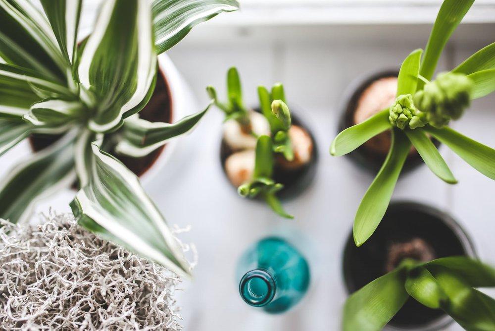 products - plants, planters, garden decor