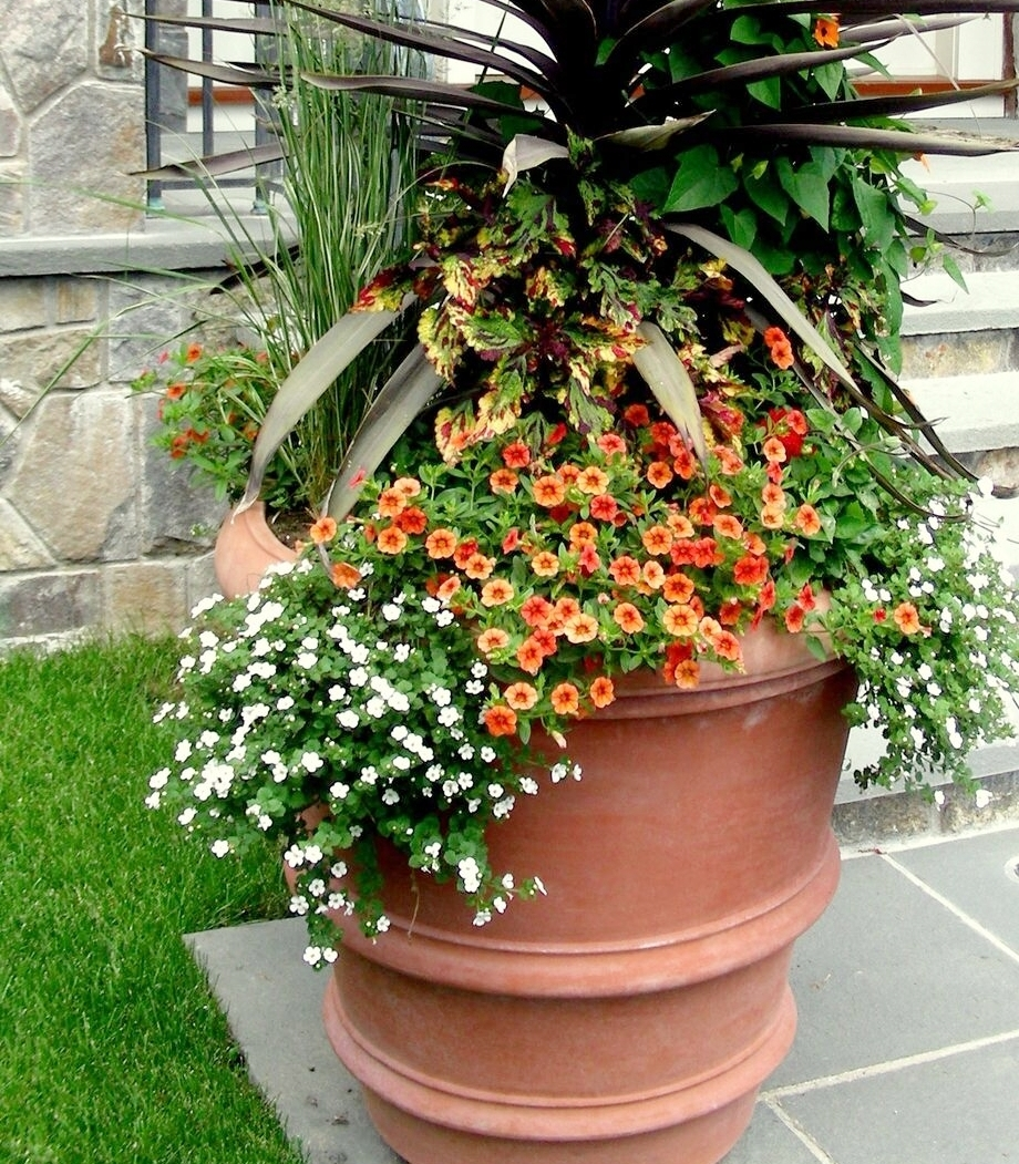 Weaver Gardens_Plants_Planters_Flowers_Garden_Gardening_Retail_Nursery_Home_Decor_Gifts_Larchmont_NY_Local_Shop_Planting_Landscape_Landscaping_Westchester County_Store_Shopping_Buy_Products_Services_Morano Landscape_Products_Services