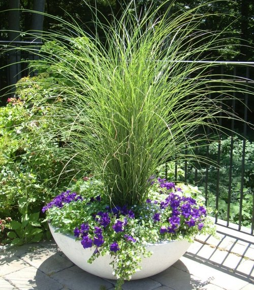 Weaver_Gardens_Morano_Landscape_Plant_Shop_Nursey_Design_Center_Garden_Center_Products_Services_Workshops_Products_Plants6.jpg