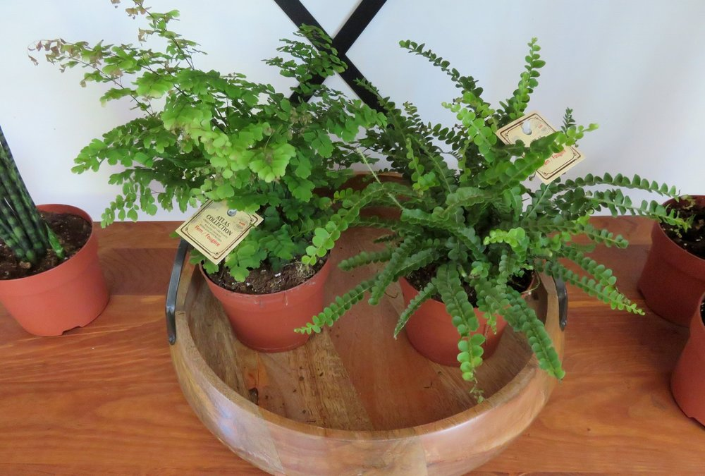 Weaver Gardens_Plants_Planters_Flowers_Garden_Gardening_Retail_Nursery_Home_Decor_Gifts_Larchmont_NY_Local_Shop_Planting_Landscape_Landscaping_Westchester County_Store_Shopping_Buy_Products_Services_Morano Landscape_Indoor