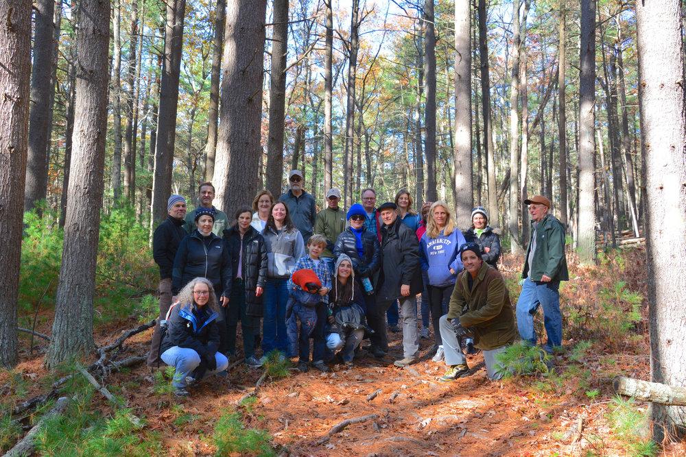 Northwest Pine Forest