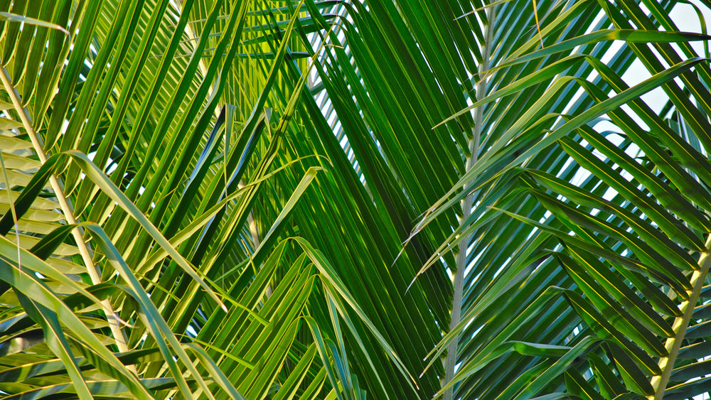 Palm Sunday   Hosanna! Hosanna! Celebrate Jesus' triumphal entry into Jerusalem on Palm Sunday. Also called Passion Sunday, Palm Sunday marks the beginning of Holy Week, when we remember the final path Jesus took to the cross. The crowd in Jerusalem waved palm branches as Jesus entered the city and they wanted to make him their new king. But, as the week unfolded their shouts of praise turned to demands for his crucifixion and Jesus received a crown of thorns to replace the palm branches. But all of this was just leading to the glory that happened next!
