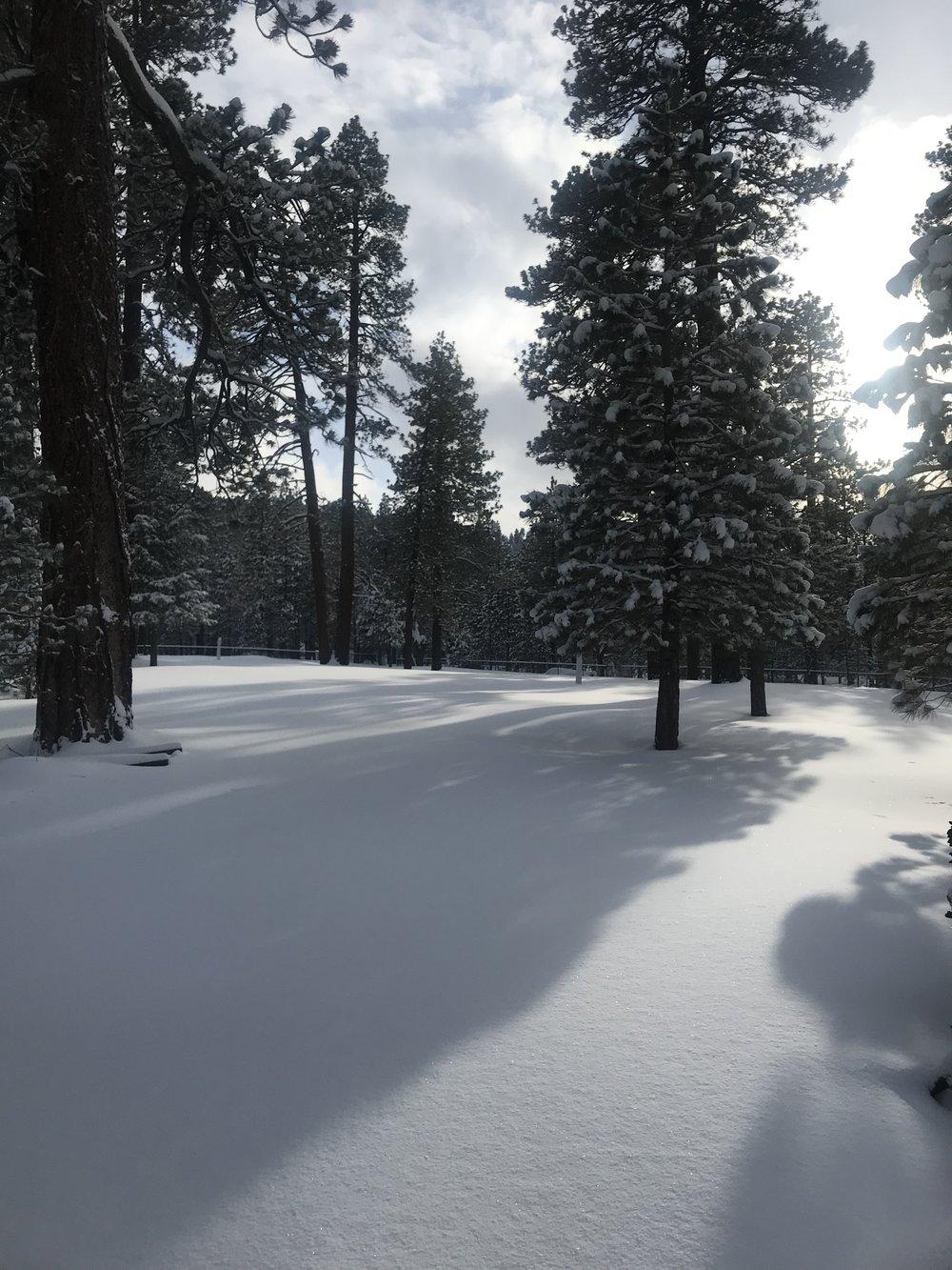 Snow Blanket - Big Bear Lake, CA