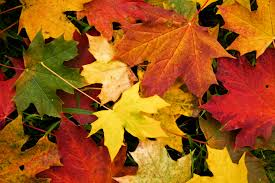 fall color leaves.jpg