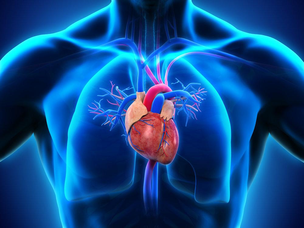 HEART & LUNG