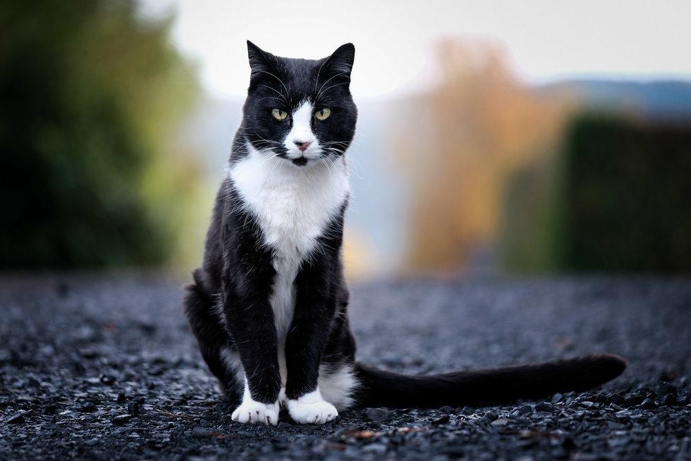 Cat pet photography