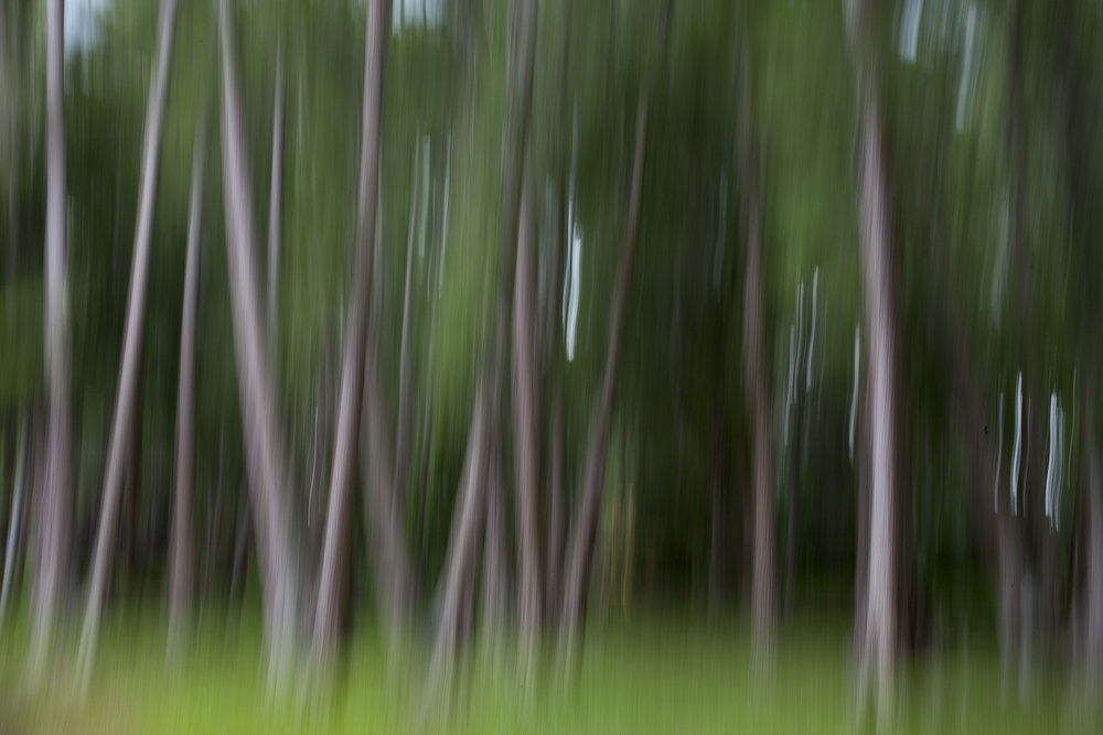 WoodStreetStudio_Trees.jpg