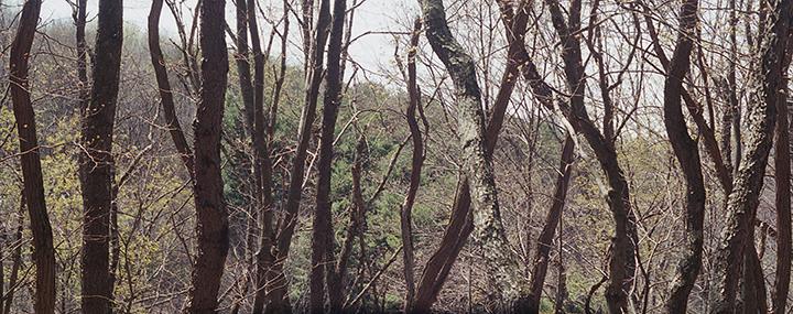 treeswinterLRFW.jpg