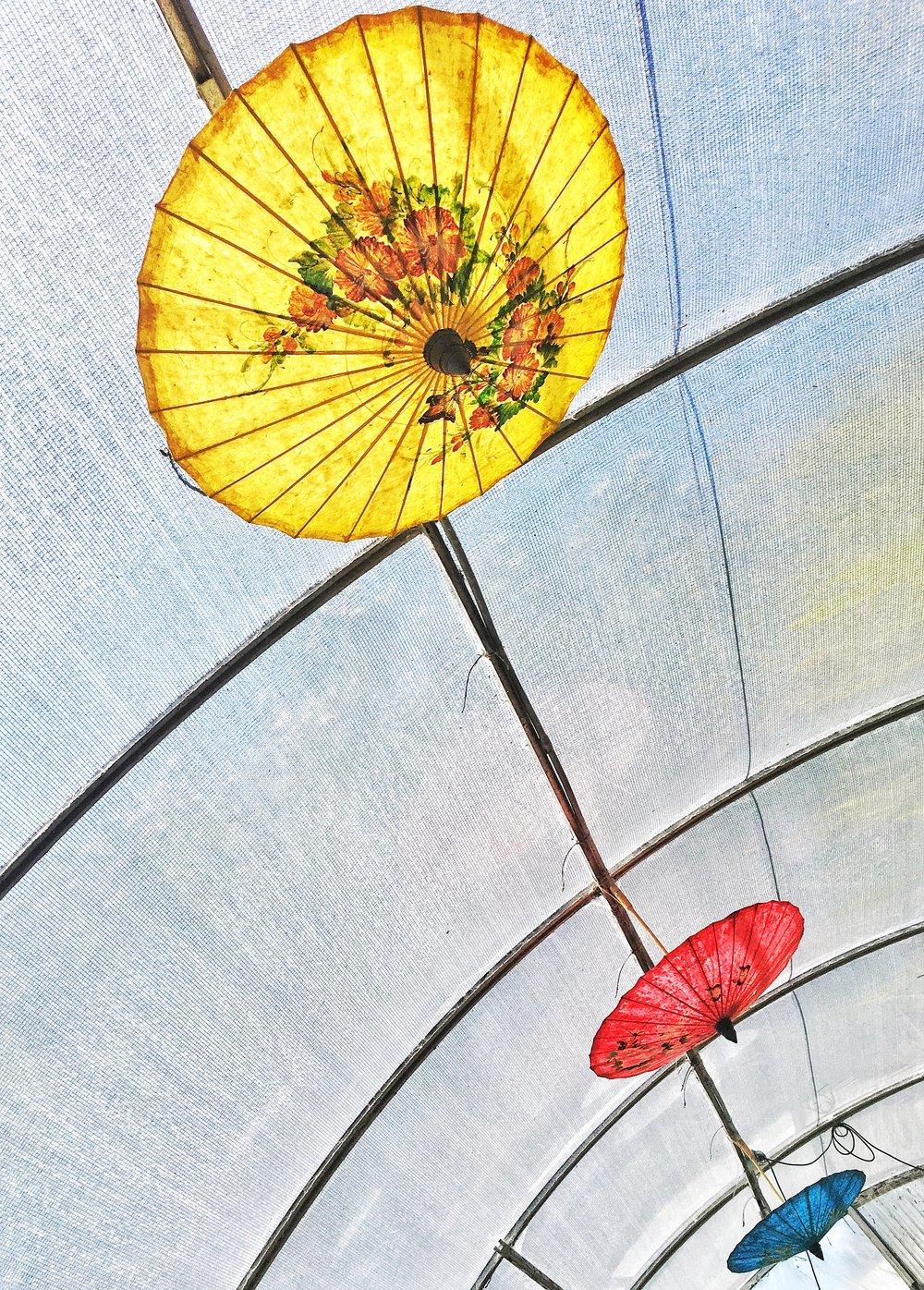 Primary color parasols