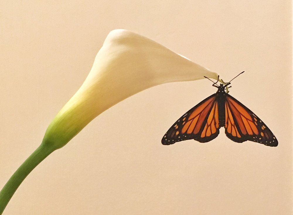 Monarch and Calla Lily