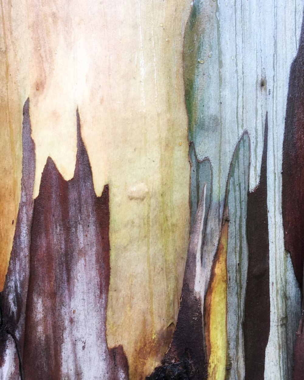 Bark Abstract