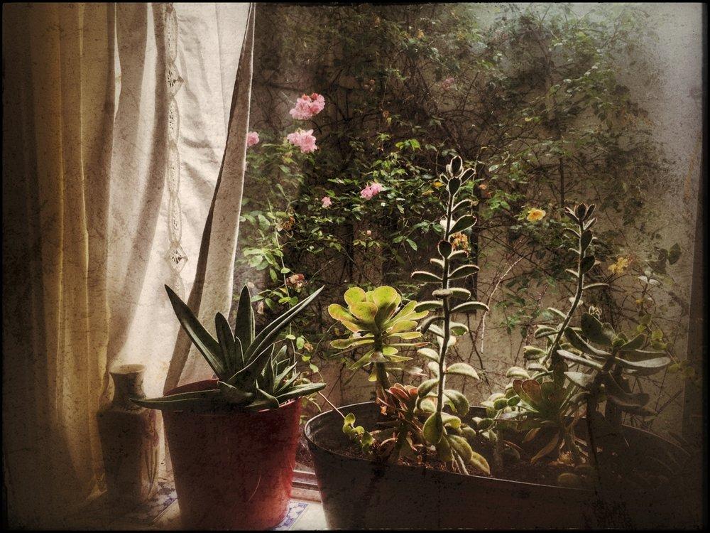 Window into Friendship