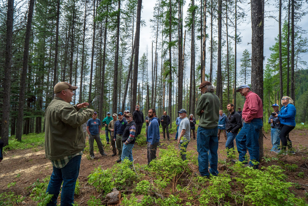 ABOUT THE COALITION - Members of NEWFC believe that working together to find common ground through new and innovative forest management solutions will help sustain the Colville National Forest for generations to come.