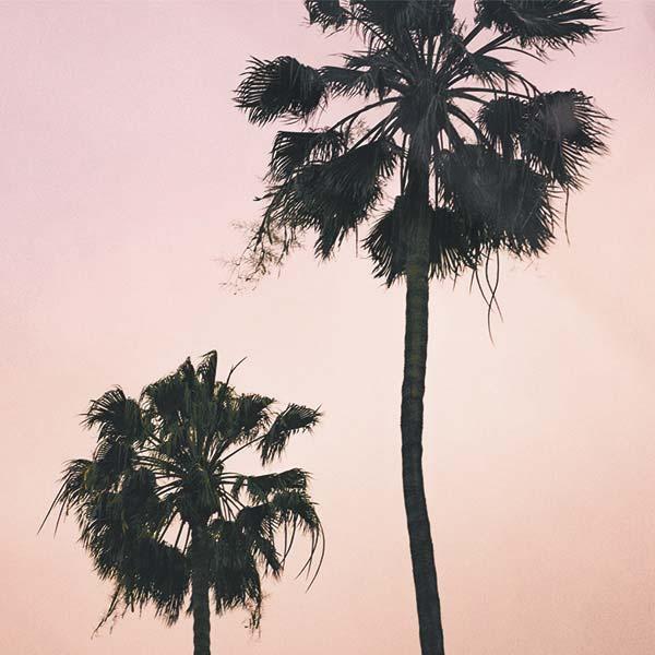 Los-Angeles-Influencers-Palm-Tree-Pink-2.jpg