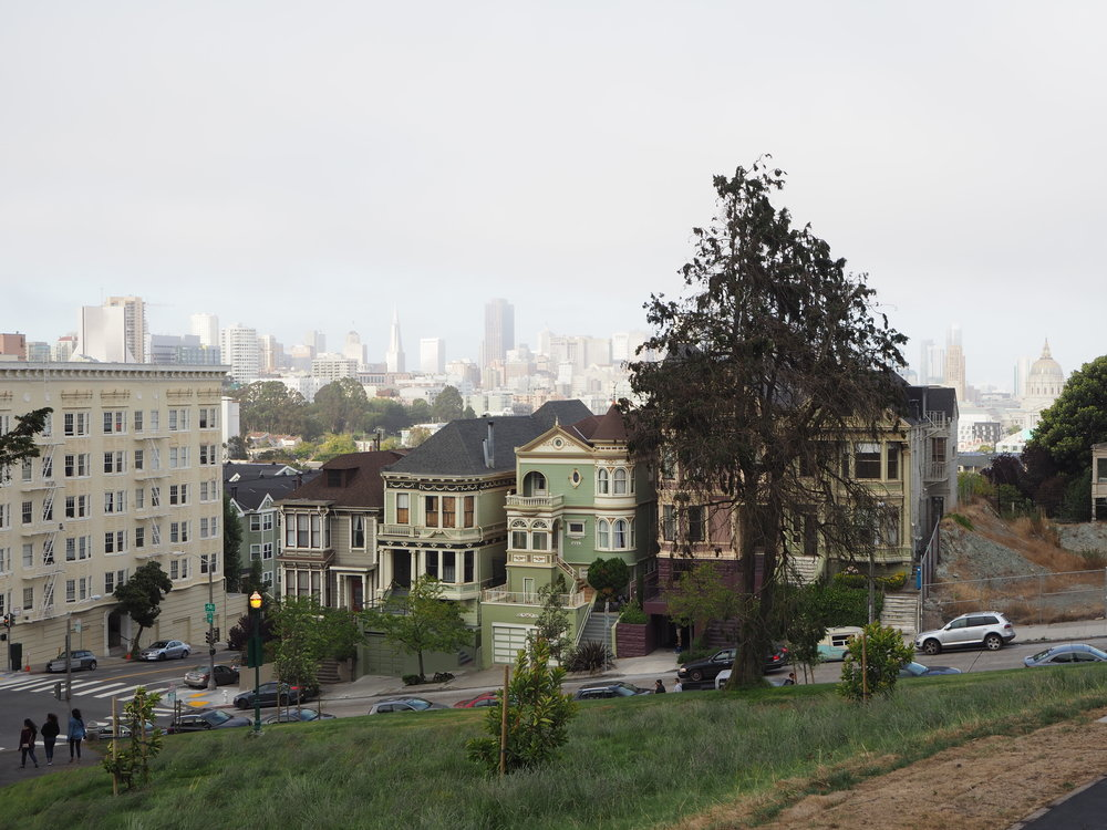 Painted Ladies on Parker Journal