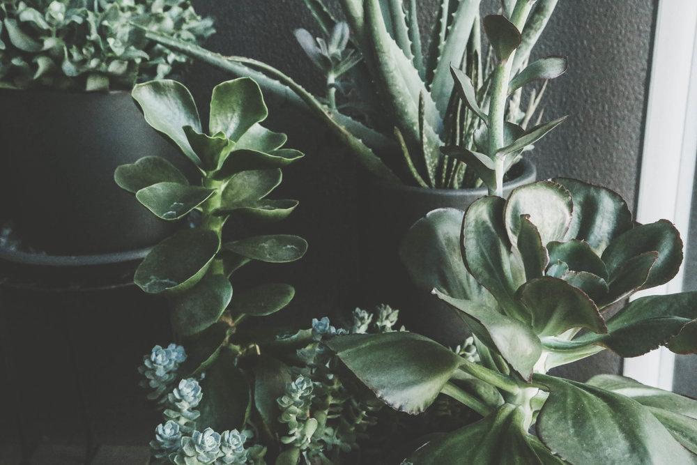 Succulent on Parker Journal