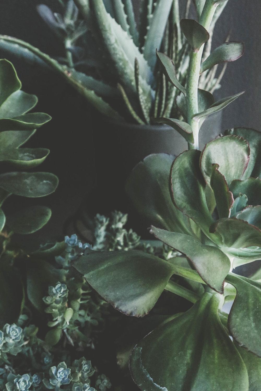 Succulents on Parker Design