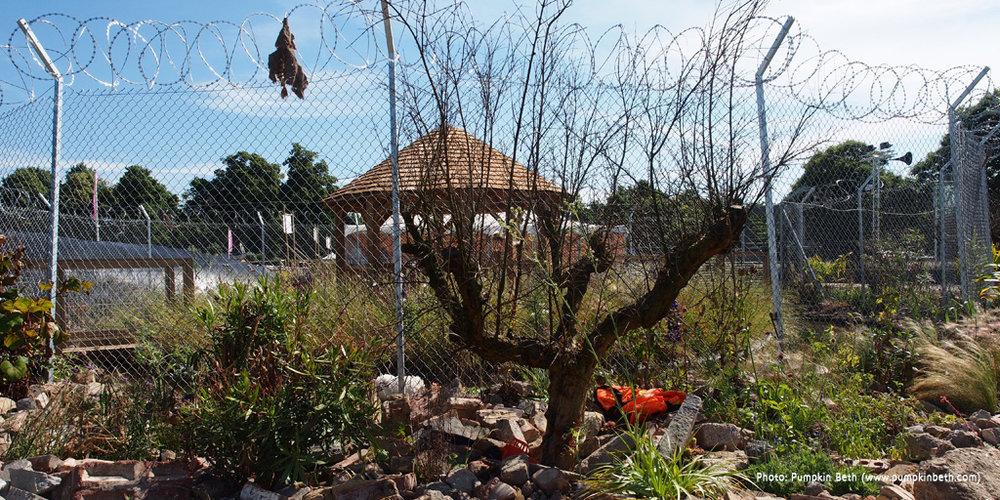 Border-Control-Garden-Dead-Pomegranate-Tree.jpg