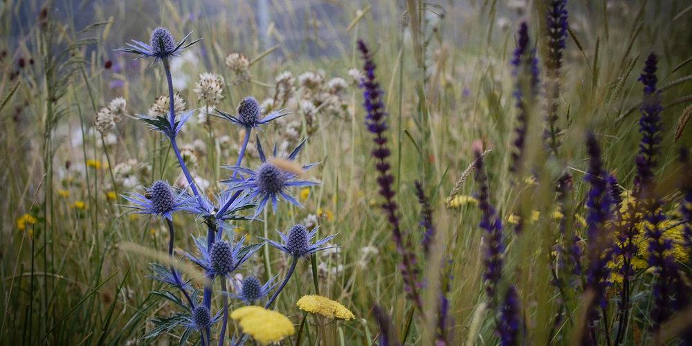 Border-Control-Garden-Meadow.jpg
