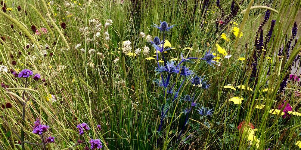 Border-Control-Garden-Vibrant-Planting.jpg