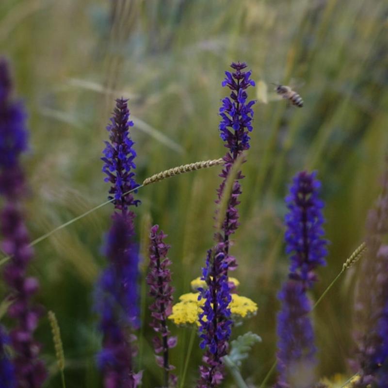 Border-Control-Garden-Bees.jpg