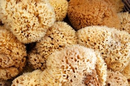 natural.sponge.jpg