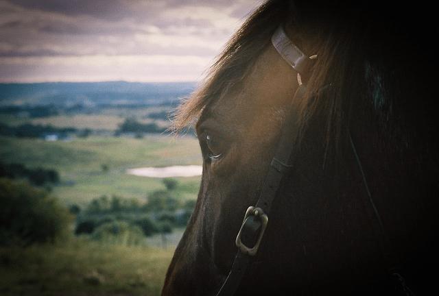 Aussie Horse-min.png