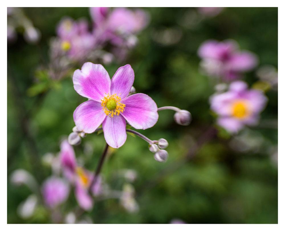 Unknown Flowers at Cox Arboretum MetroPark - Nikon D750 w/Lensbaby Sol 45 lens