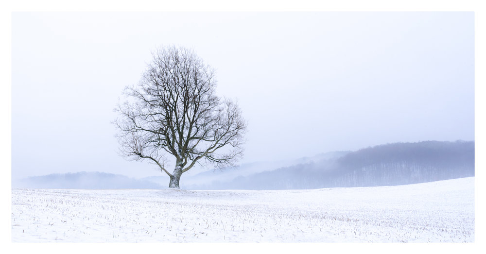 Lone Tree - Hocking County. Digital Pano Stitch