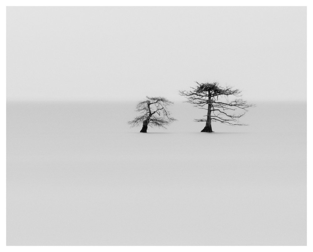 Study of Two Bald Cypress Trees at Mattamuskeet - you can see some of Michael Kenna's influence on me with this image. Nikon D750 w/80-400mm lens, long exposure.