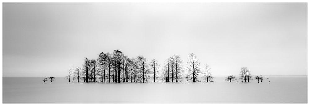 The Mattamuskeet Bald Cypress Trees - Fuji GX617 w/180mm lens on Fuji ACROS film, long exposure